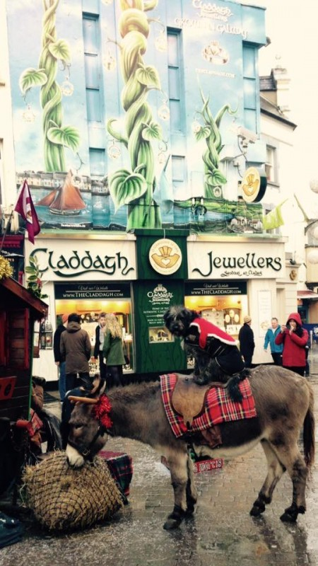 famous-christmas-donkey-in-galway